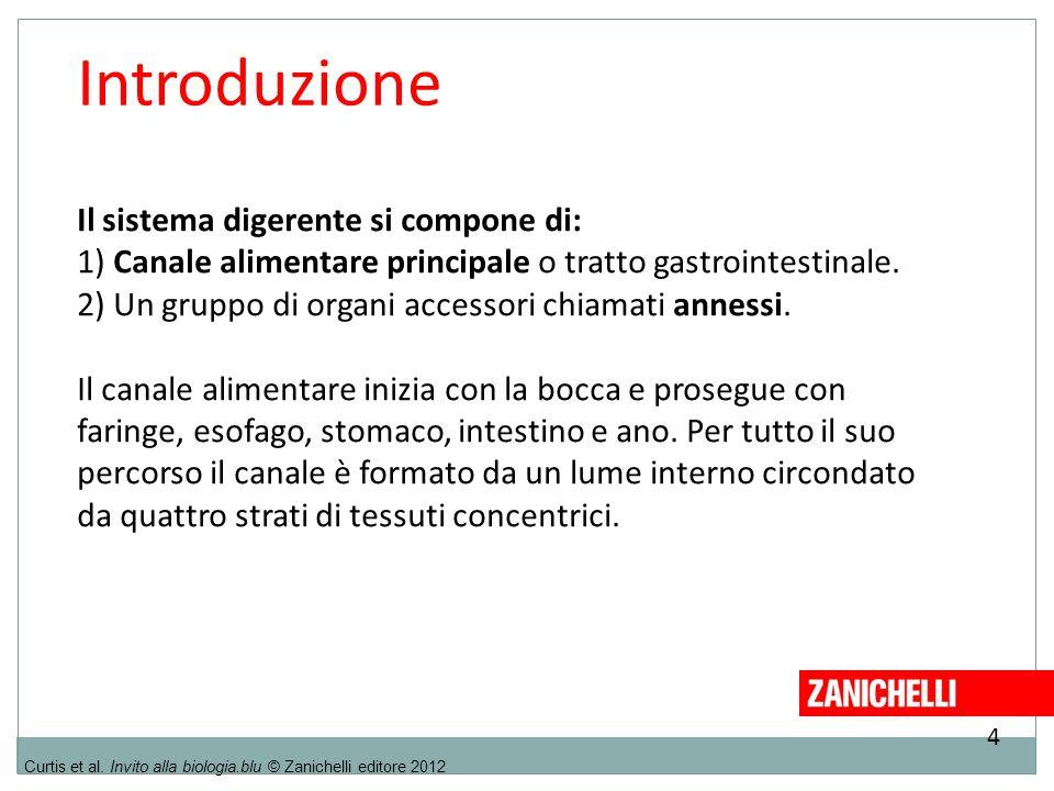 4 Curtis et al. Invito alla biologia.blu © Zanichelli editore 2012 Introduzione Il sistema digerente si compone di: 1) Canale alimentare principale o