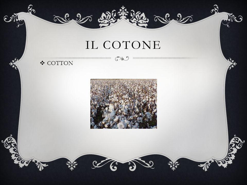 IL COTONE  COTTON