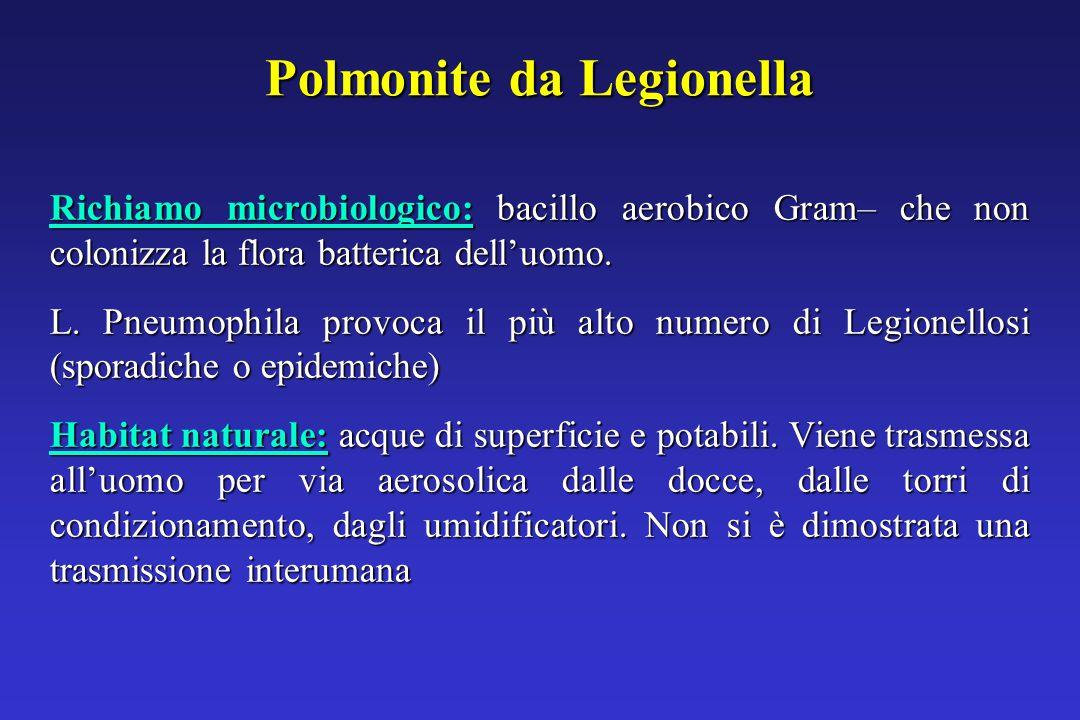 Polmonite da Legionella Richiamo microbiologico: bacillo aerobico Gram– che non colonizza la flora batterica dell'uomo.