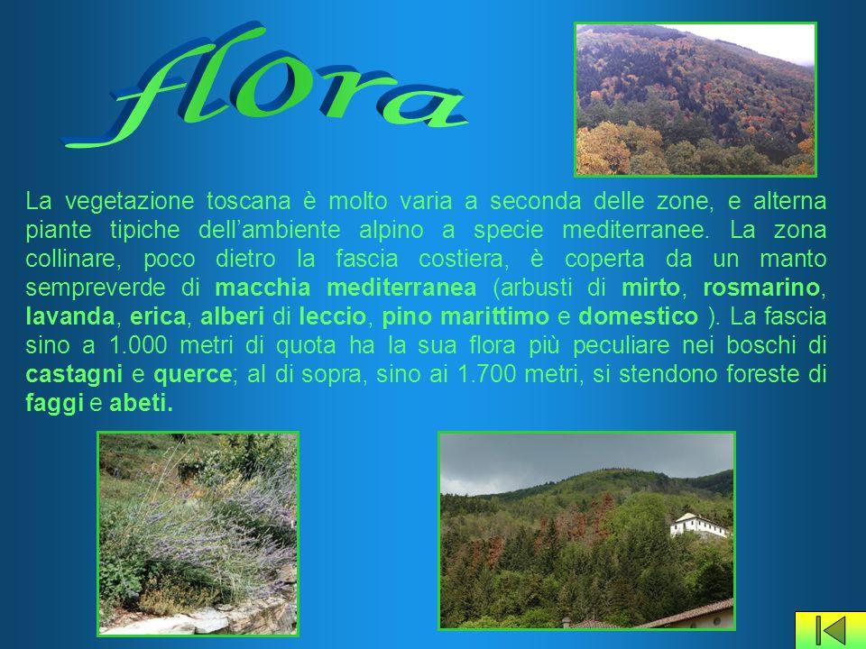 La vegetazione toscana è molto varia a seconda delle zone, e alterna piante tipiche dell'ambiente alpino a specie mediterranee. La zona collinare, poc