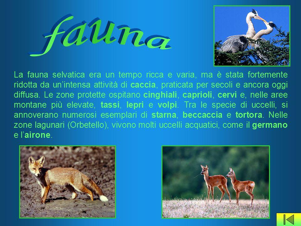 La fauna selvatica era un tempo ricca e varia, ma è stata fortemente ridotta da un'intensa attività di caccia, praticata per secoli e ancora oggi diff