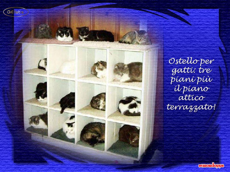 Ostello per gatti: tre piani più il piano attico terrazzato!