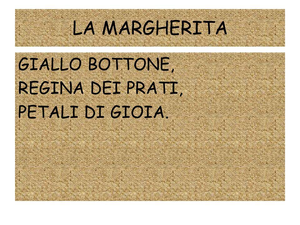 LA MARGHERITA GIALLO BOTTONE, REGINA DEI PRATI, PETALI DI GIOIA.