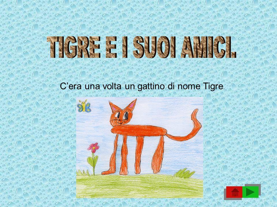 C'era una volta un gattino di nome Tigre.