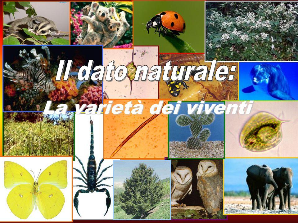 La varietà dei viventi