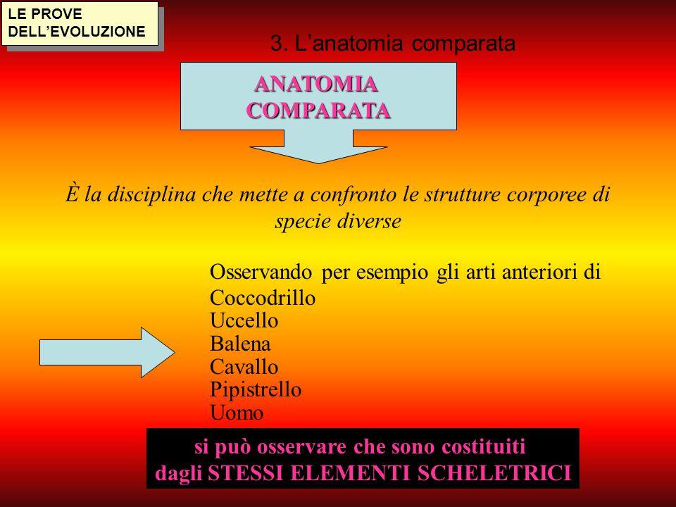 LE PROVE DELL'EVOLUZIONE 3. L'anatomia comparata ANATOMIACOMPARATA È la disciplina che mette a confronto le strutture corporee di specie diverse Osser