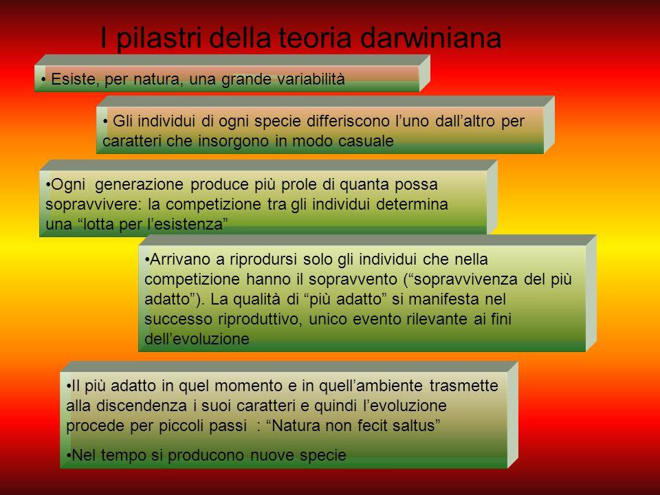I pilastri della teoria darwiniana Esiste, per natura, una grande variabilità Gli individui di ogni specie differiscono l'uno dall'altro per caratteri