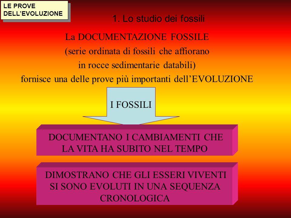 I FOSSILI LE PROVE DELL'EVOLUZIONE 1. Lo studio dei fossili La DOCUMENTAZIONE FOSSILE (serie ordinata di fossili che affiorano in rocce sedimentarie d