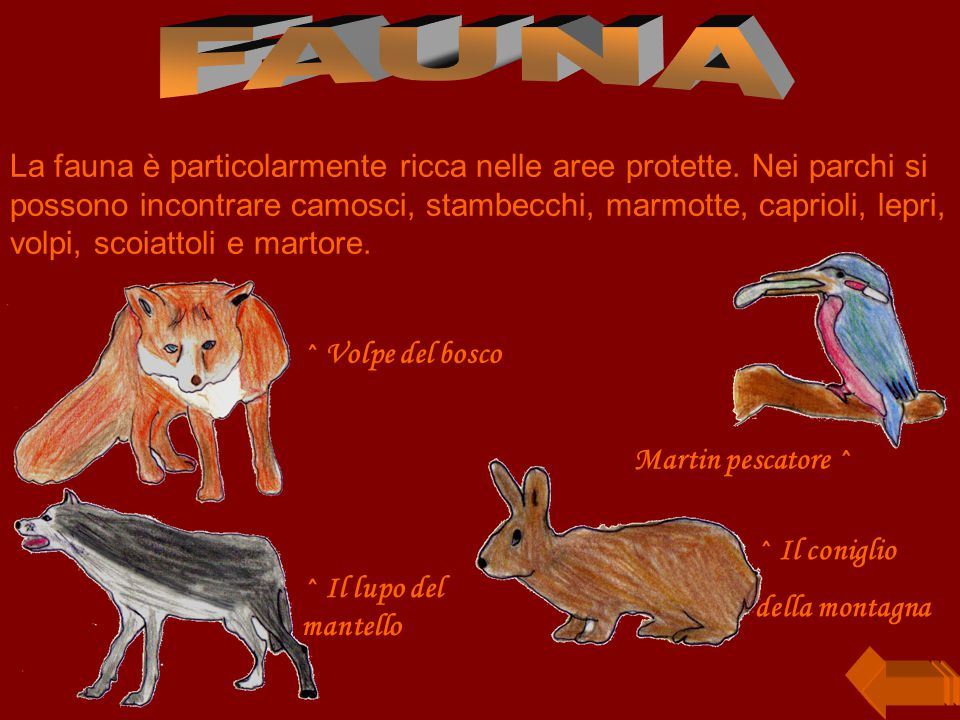 La fauna è particolarmente ricca nelle aree protette.