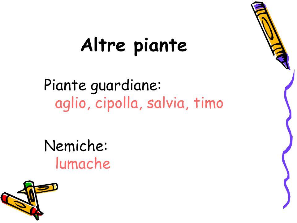 Altre piante Piante guardiane: aglio, cipolla, salvia, timo Nemiche: lumache