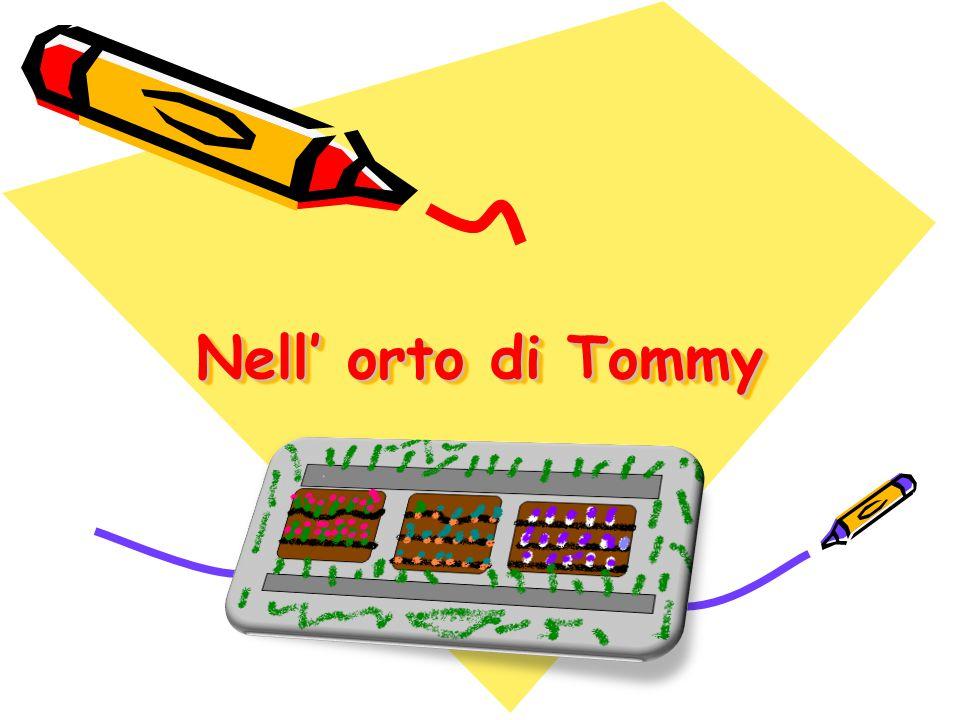 Nell' orto di Tommy Nell' orto di Tommy