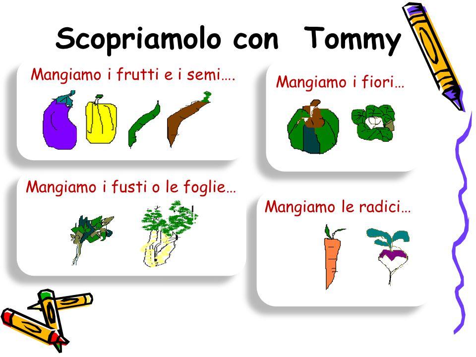 Scopriamolo con Tommy Mangiamo i frutti e i semi…. Mangiamo i fiori… Mangiamo i fusti o le foglie… Mangiamo le radici…