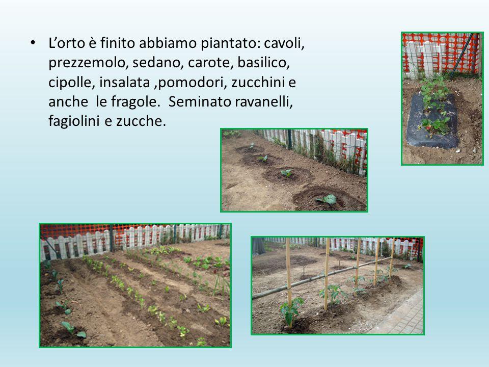 L'orto è finito abbiamo piantato: cavoli, prezzemolo, sedano, carote, basilico, cipolle, insalata,pomodori, zucchini e anche le fragole.