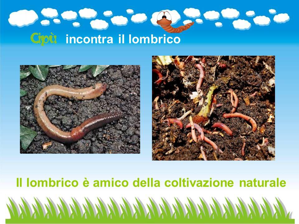 incontra il lombrico Il lombrico è amico della coltivazione naturale