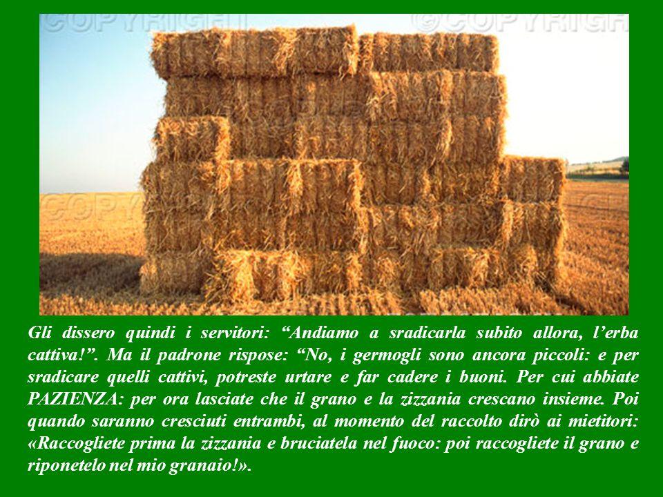 Quando i primi germogli cominciarono a crescere, assieme al grano quindi spuntò anche l'erba cattiva.