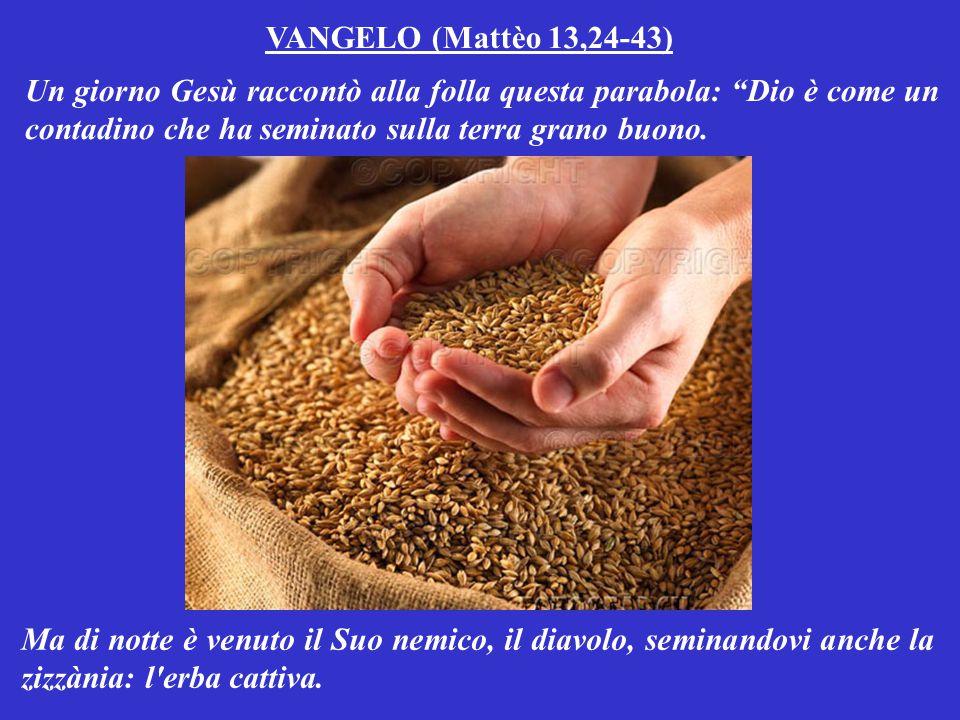 VANGELO (Mattèo 13,24-43) Un giorno Gesù raccontò alla folla questa parabola: Dio è come un contadino che ha seminato sulla terra grano buono.