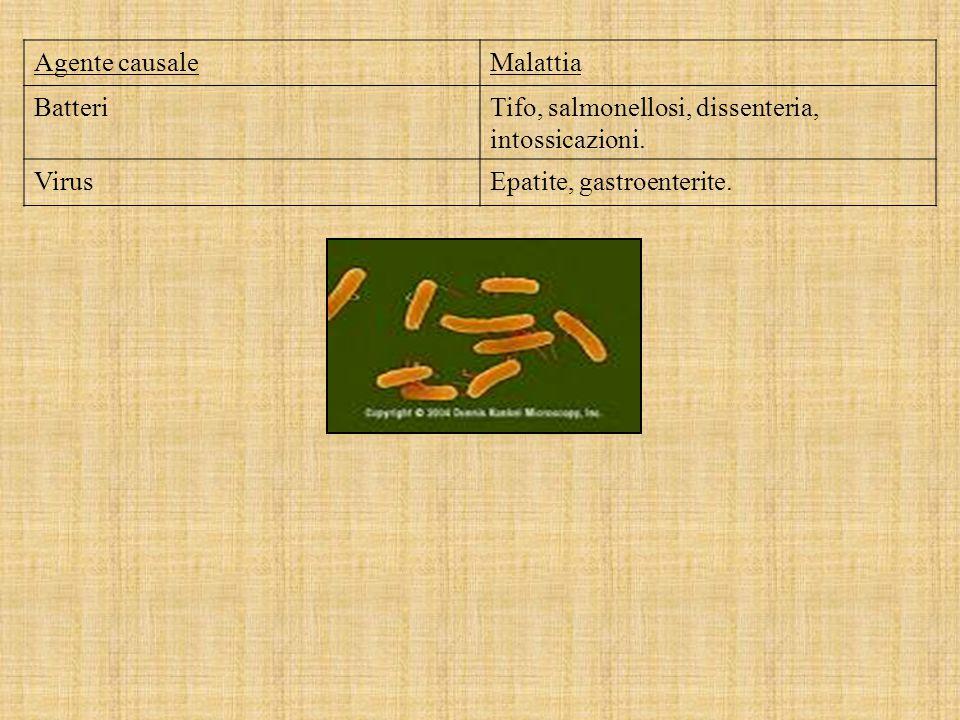 Agente causaleMalattia BatteriTifo, salmonellosi, dissenteria, intossicazioni.
