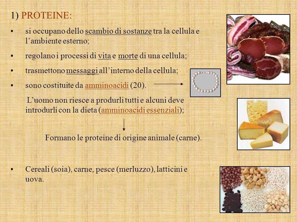 Formano le proteine di origine animale (carne).