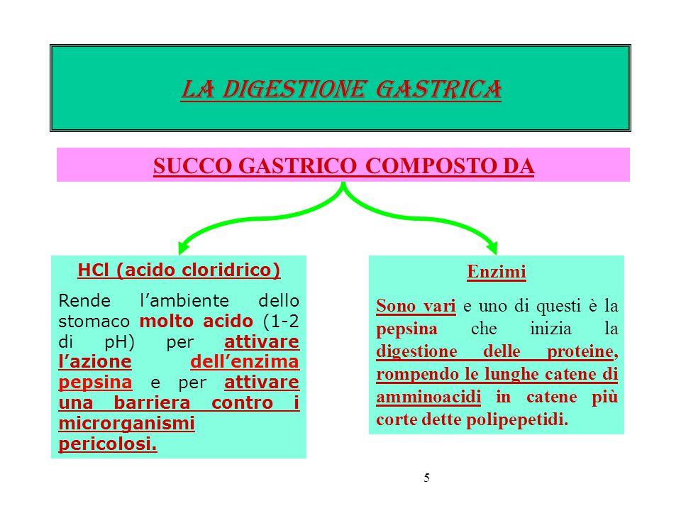 5 LA DIGESTIONE gastrica SUCCO GASTRICO COMPOSTO DA HCl (acido cloridrico) Rende l'ambiente dello stomaco molto acido (1-2 di pH) per attivare l'azione dell'enzima pepsina e per attivare una barriera contro i microrganismi pericolosi.