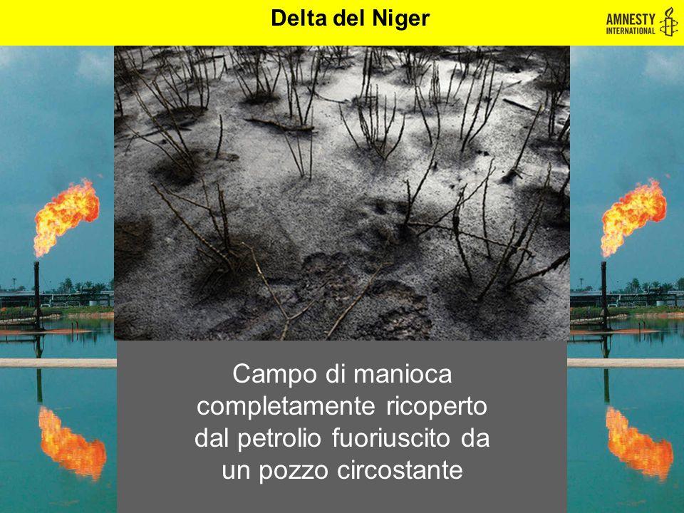 Delta del Niger Campo di manioca completamente ricoperto dal petrolio fuoriuscito da un pozzo circostante