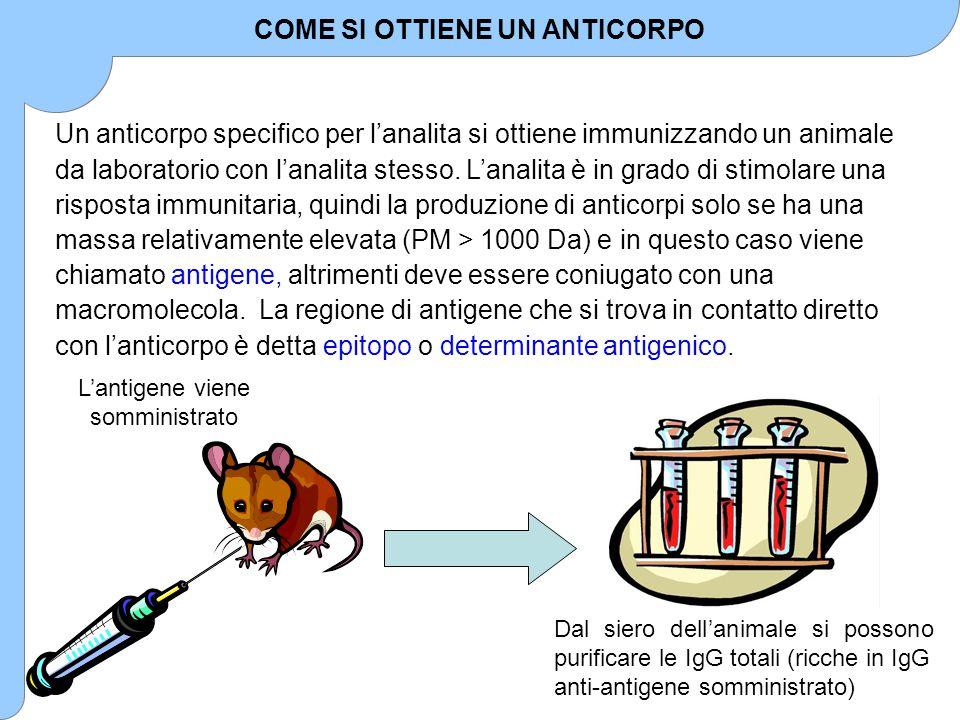 Un anticorpo specifico per l'analita si ottiene immunizzando un animale da laboratorio con l'analita stesso. L'analita è in grado di stimolare una ris