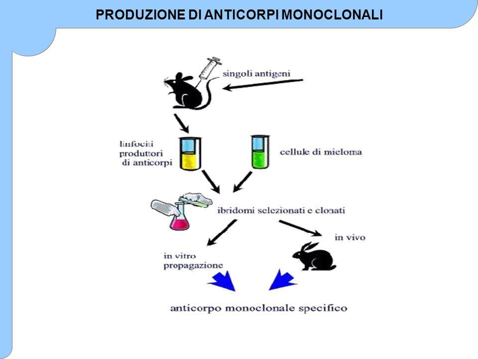 PRODUZIONE DI ANTICORPI MONOCLONALI