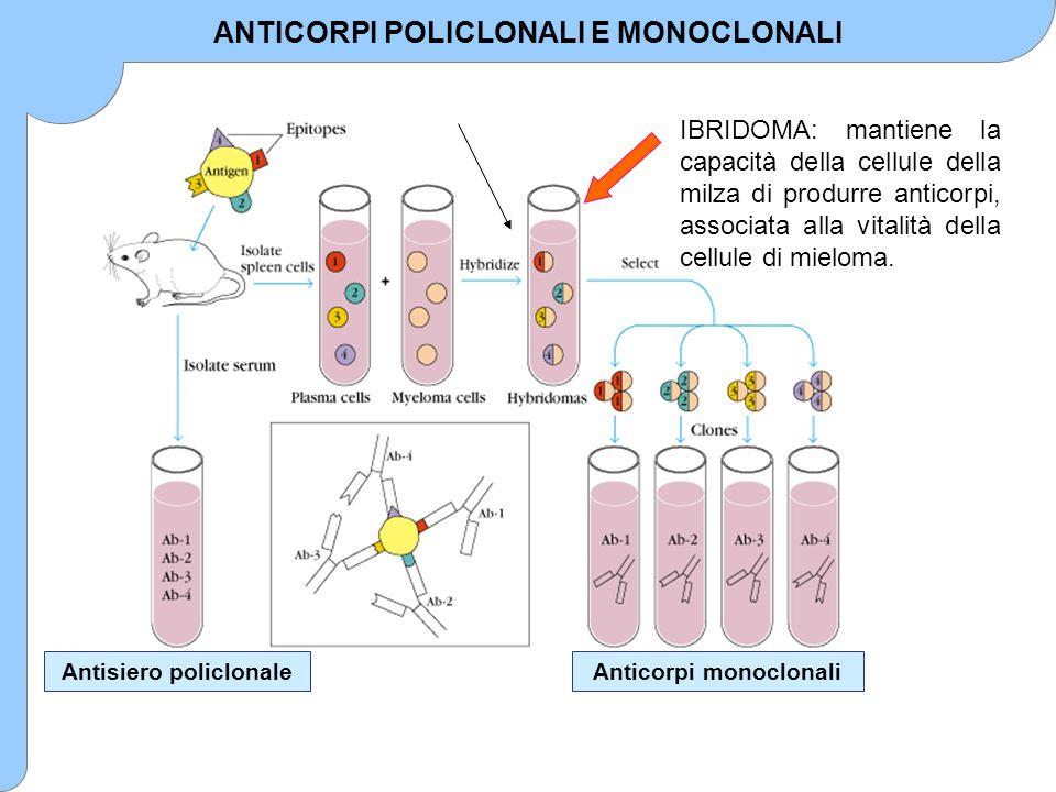 Antisiero policlonaleAnticorpi monoclonali IBRIDOMA: mantiene la capacità della cellule della milza di produrre anticorpi, associata alla vitalità del