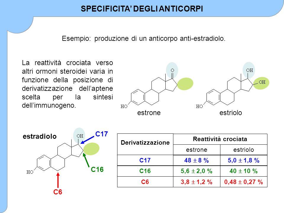 Esempio:produzione di un anticorpo anti-estradiolo. estradiolo C6 C16 C17 SPECIFICITA' DEGLI ANTICORPI estrioloestrone 3,8  1,2 % 5,6  2,0 % 48  8