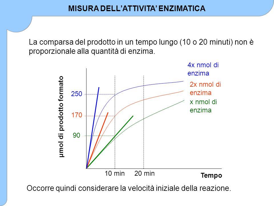 Tempo μmol di prodotto formato x nmol di enzima 2x nmol di enzima 4x nmol di enzima 10 min20 min 90 170 250 La comparsa del prodotto in un tempo lungo