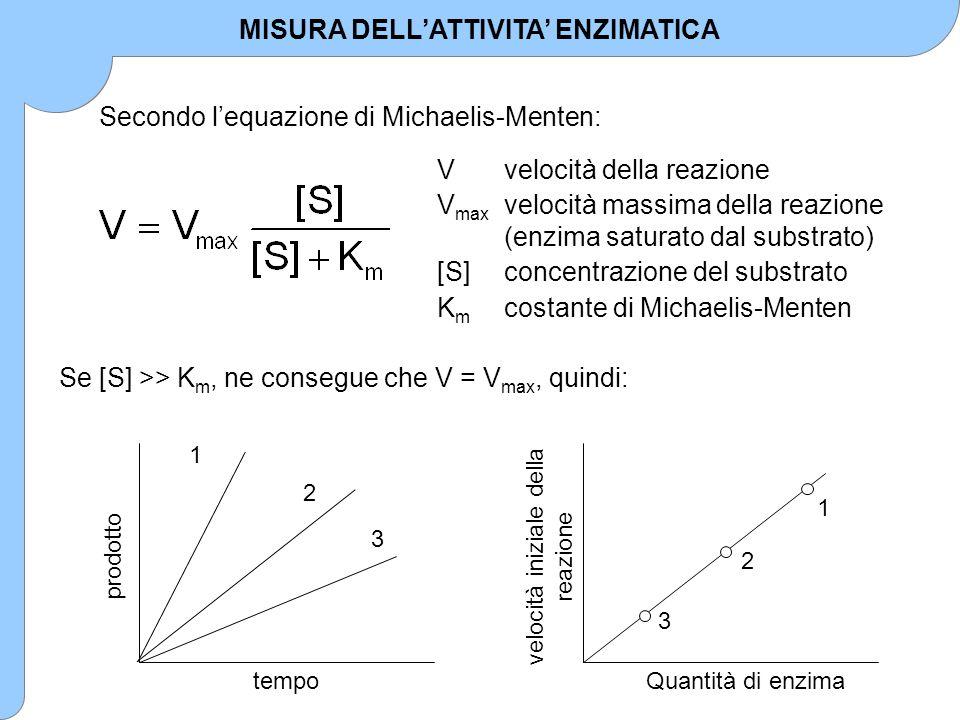Secondo l'equazione di Michaelis-Menten: Vvelocità della reazione V max velocità massima della reazione (enzima saturato dal substrato) [S]concentrazi
