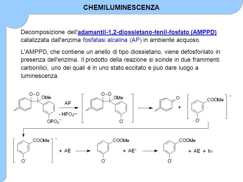 Decomposizione dell'adamantil-1,2-diossietano-fenil-fosfato (AMPPD) catalizzata dall'enzima fosfatasi alcalina (AP) in ambiente acquoso. L'AMPPD, che