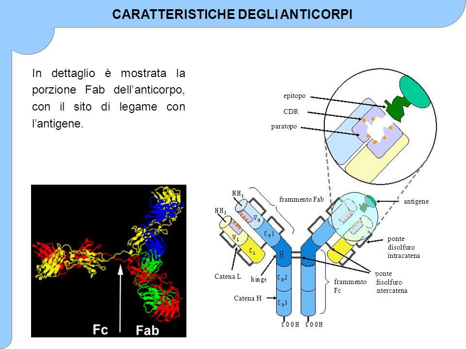 AbAn + An-Ab Ka Kd Dove: [Ab] eq = concentrazione di anticorpo libero all'equilibrio [An] eq = concentrazione di analita libero all'equilibrio [An-Ab] eq = concentrazione di complesso analita-anticorpo all'equilibrio Si indica con: Ab t = concentrazione totale di anticorpo = [Ab] eq + [An-Ab] eq T = concentrazione totale di analita = [An] eq + [An-Ab] eq ovvero = [An] i + [An*] i (dove An è l'analita nel campione e An* è l'analita marcato) R = [An-Ab] eq /T, cioè frazione di analita legato.