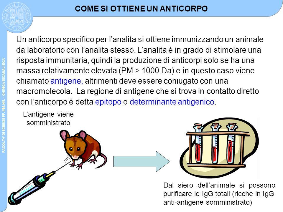 FACOLTA' DI SCIENZE FF. MM. NN. – CHIMICA BIOANALITICA Un anticorpo specifico per l'analita si ottiene immunizzando un animale da laboratorio con l'an