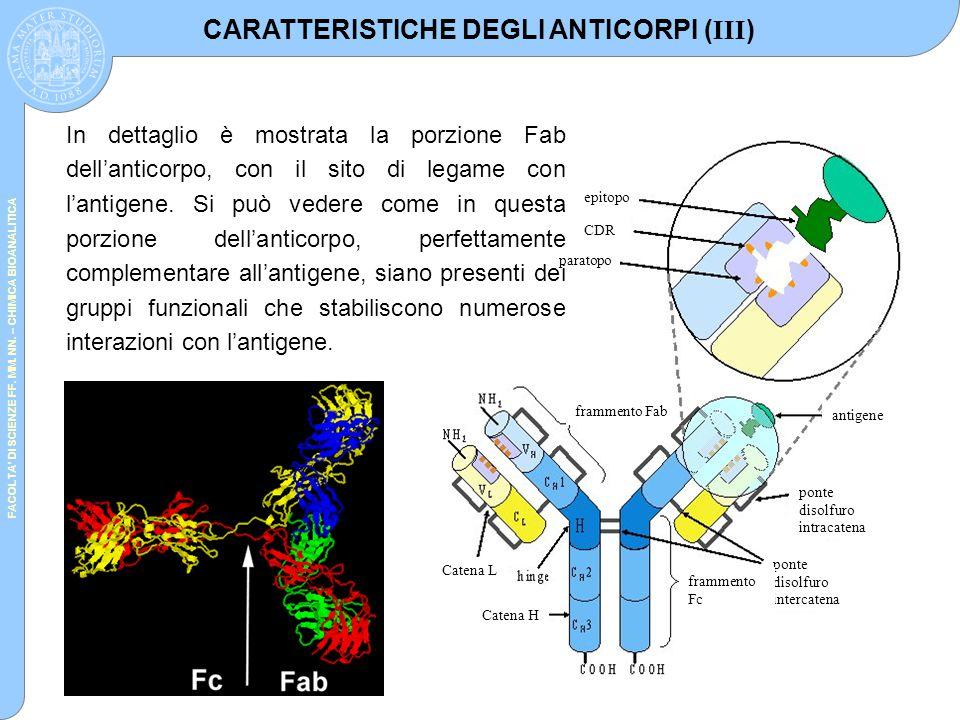 FACOLTA' DI SCIENZE FF. MM. NN. – CHIMICA BIOANALITICA epitopo paratopo CDR antigene ponte disolfuro intracatena ponte disolfuro intercatena frammento