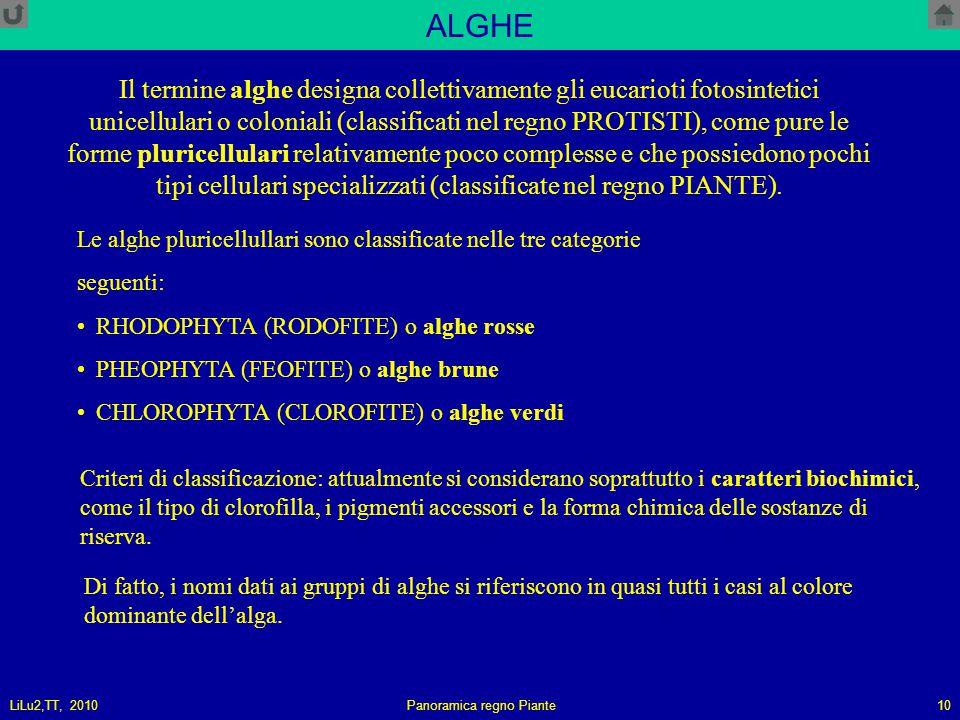 LiLu2,TT, 2010Panoramica regno Piante10 ALGHE Il termine alghe designa collettivamente gli eucarioti fotosintetici unicellulari o coloniali (classificati nel regno PROTISTI), come pure le forme pluricellulari relativamente poco complesse e che possiedono pochi tipi cellulari specializzati (classificate nel regno PIANTE).