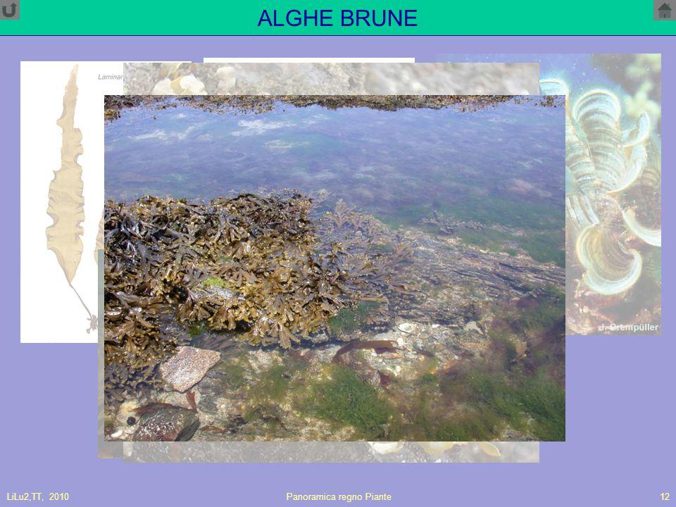LiLu2,TT, 2010Panoramica regno Piante12 ALGHE BRUNE