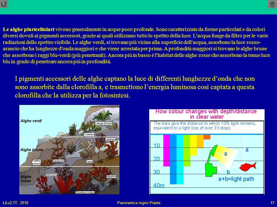 LiLu2,TT, 2010Panoramica regno Piante17 I pigmenti accessori delle alghe captano la luce di differenti lunghezze d'onda che non sono assorbite dalla clorofilla a, e trasmettono l'energia luminosa così captata a questa clorofilla che la utilizza per la fotosintesi.