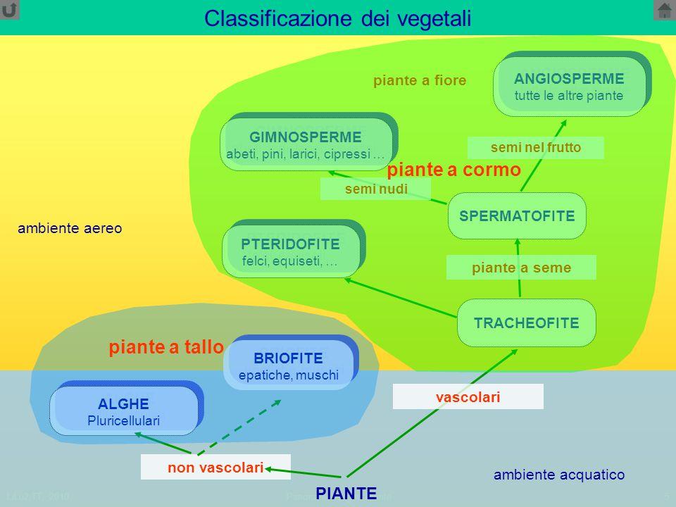 LiLu2,TT, 2010Panoramica regno Piante5 Classificazione dei vegetali PIANTE non vascolari BRIOFITE epatiche, muschi BRIOFITE epatiche, muschi TRACHEOFITE SPERMATOFITE ALGHE Pluricellulari ALGHE Pluricellulari ambiente acquatico PTERIDOFITE felci, equiseti, … PTERIDOFITE felci, equiseti, … GIMNOSPERME abeti, pini, larici, cipressi … GIMNOSPERME abeti, pini, larici, cipressi … ANGIOSPERME tutte le altre piante ANGIOSPERME tutte le altre piante piante a fiore vascolari piante a seme semi nudi semi nel frutto ambiente aereo piante a cormo piante a tallo