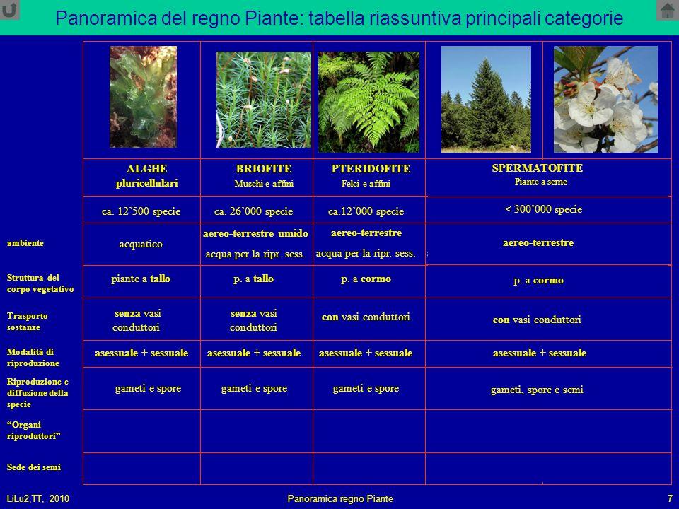 LiLu2,TT, 2010Panoramica regno Piante7 Panoramica del regno Piante: tabella riassuntiva principali categorie ALGHE pluricellulari BRIOFITE PTERIDOFITE GIMNOSPERMEANGIOSPERME Muschi e affiniFelci e affiniConifere e affiniPiante a fiore piante a tallop.