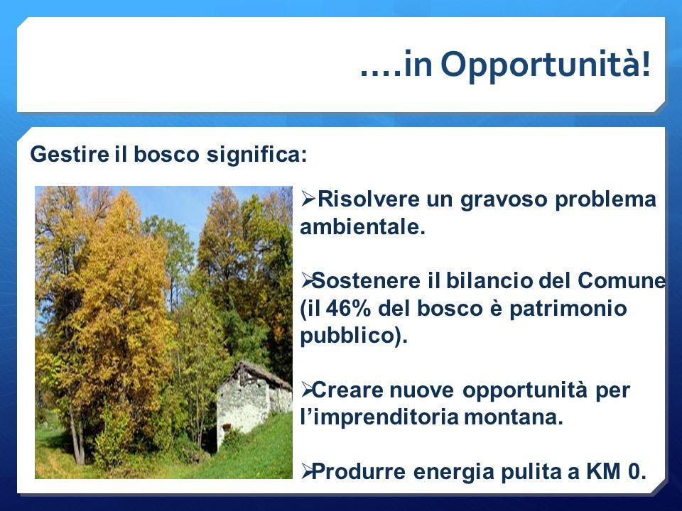 ….in Opportunità! Gestire il bosco significa:  Risolvere un gravoso problema ambientale.  Sostenere il bilancio del Comune (il 46% del bosco è patri