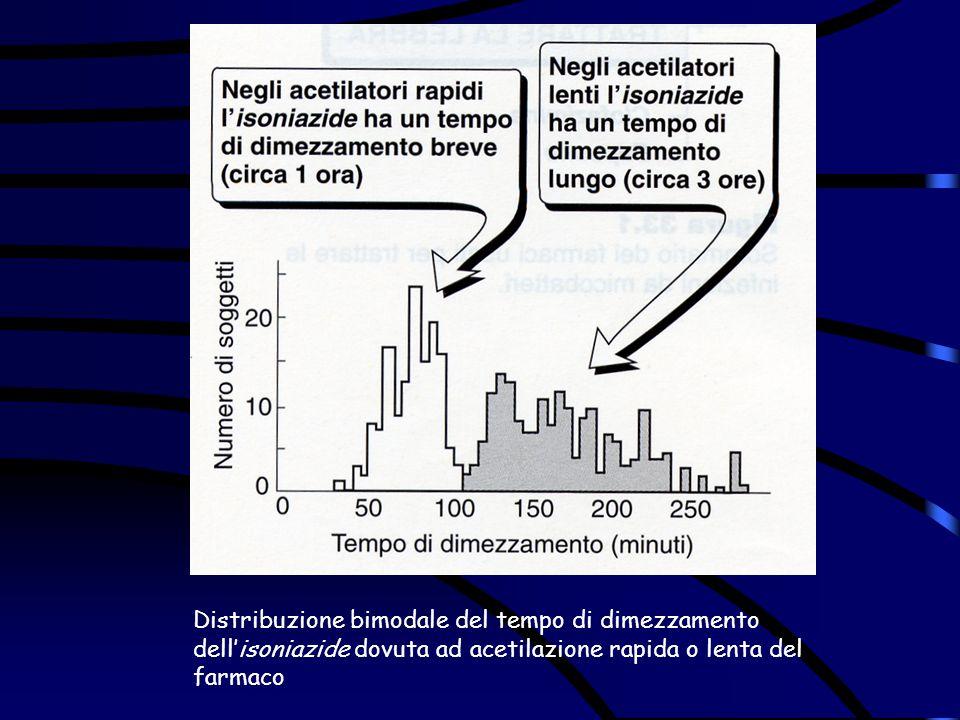 Distribuzione bimodale del tempo di dimezzamento dell'isoniazide dovuta ad acetilazione rapida o lenta del farmaco