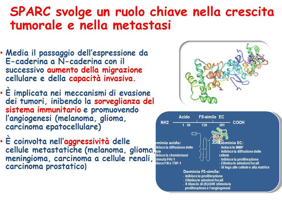 SPARC svolge un ruolo chiave nella crescita tumorale e nella metastasi Media il passaggio dell'espressione da E-caderina a N-caderina con il successivo aumento della migrazione cellulare e della capacità invasiva.