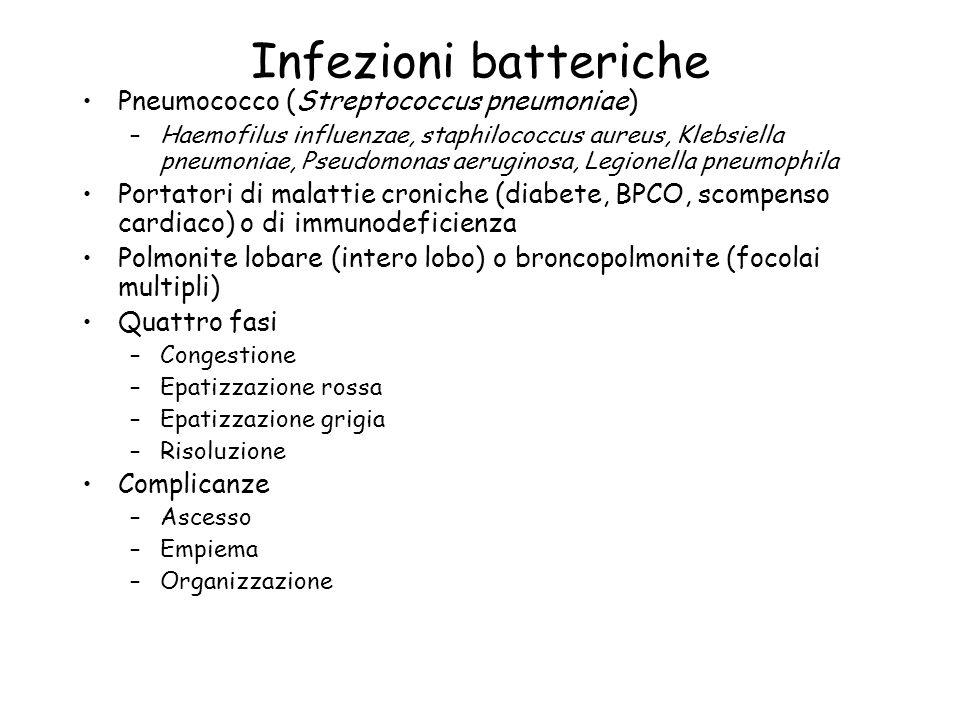 Infezioni batteriche Pneumococco (Streptococcus pneumoniae) –Haemofilus influenzae, staphilococcus aureus, Klebsiella pneumoniae, Pseudomonas aerugino