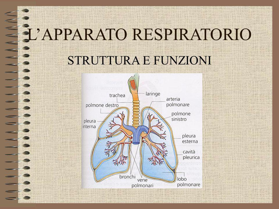 L'APPARATO RESPIRATORIO STRUTTURA E FUNZIONI