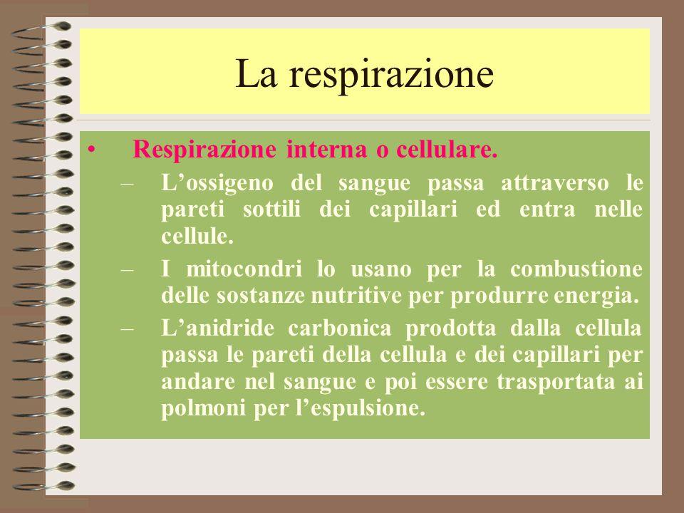La respirazione Respirazione interna o cellulare. –L'ossigeno del sangue passa attraverso le pareti sottili dei capillari ed entra nelle cellule. –I m