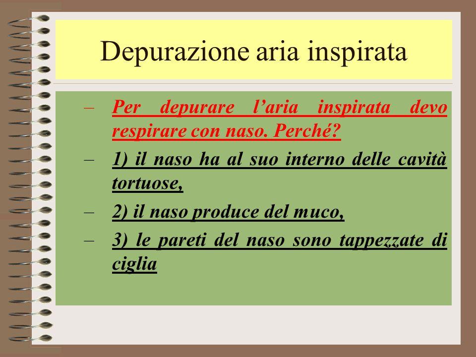 Depurazione aria inspirata –Per depurare l'aria inspirata devo respirare con naso. Perché? –1) il naso ha al suo interno delle cavità tortuose, –2) il