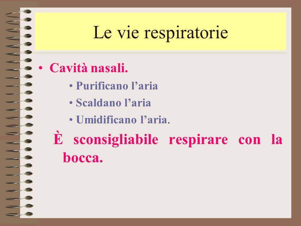Le vie respiratorie Cavità nasali. Purificano l'aria Scaldano l'aria Umidificano l'aria. È sconsigliabile respirare con la bocca.