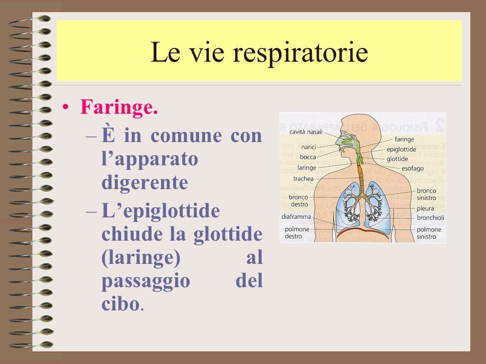 Le vie respiratorie Faringe. –È in comune con l'apparato digerente –L'epiglottide chiude la glottide (laringe) al passaggio del cibo.