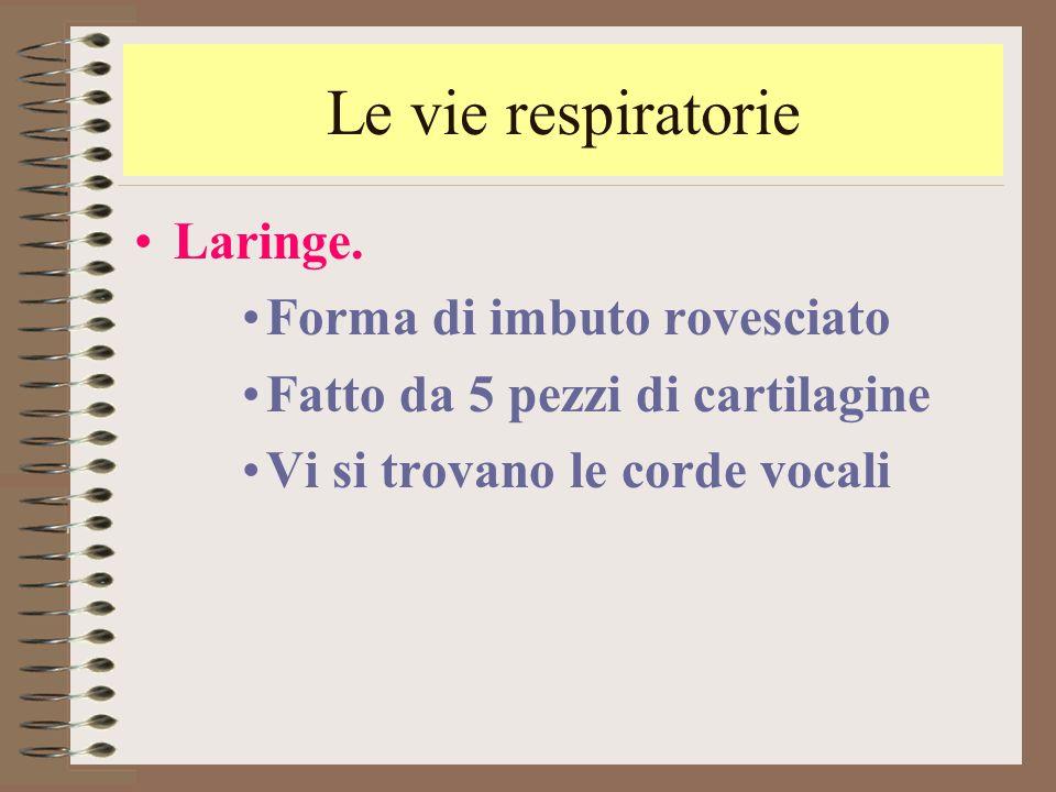 Le vie respiratorie Laringe. Forma di imbuto rovesciato Fatto da 5 pezzi di cartilagine Vi si trovano le corde vocali