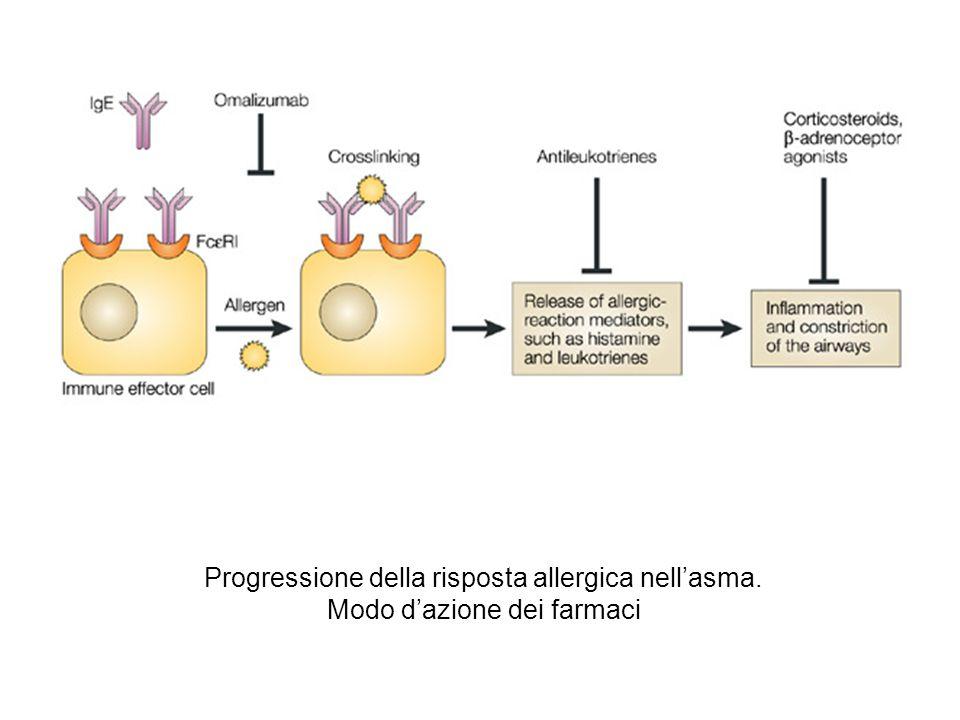 Progressione della risposta allergica nell'asma. Modo d'azione dei farmaci